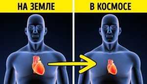 Сердечные мышцы в космосе